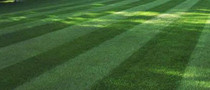 Maumee Ohio Lawn Services from Toledo Lawns