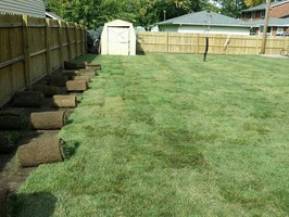 Fully restored lawn by Toledo Lawns