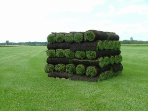 Commercial Sod Installers and Sod Installation Contractors