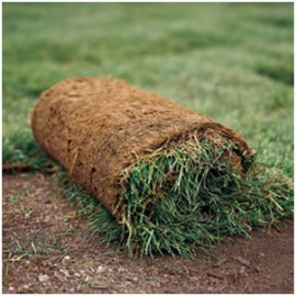 Our Sod Installation Services